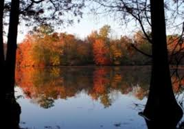 looking out over the lake with autumn color leaves